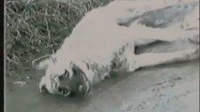 Türkiye'de Köpek Olmak