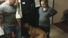 Anne Karnındaki Bebeği Koruyan Köpek
