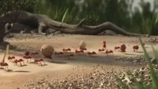 Birlikten Kuvvet Doğar - Animasyon