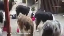 İsim İsim Yoklaması Alınıp İstihkakını Yiyen Köpekler