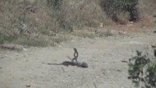 Siyah Yılanların Dansı - Malatya - Arapgir