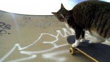 GoPro: Didga the Skateboarding Cat