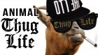 Hayvanlar Thug Life Part 1
