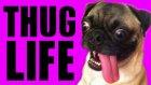 Hayvanlar Thug Life Part 2
