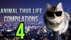 Hayvanlar Thug Life Part 4