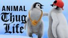 Hayvanlar Thug Life Part 5