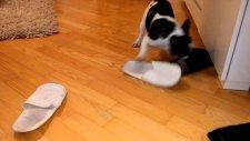 Kedi'nin Terliklere Olan Gıcıklığı