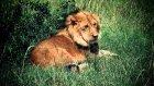 Kenya Fotosafari Turu | Kenya Fotoğraf Turları | Gazella Turizm
