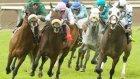 Şanlıurfa At Yarışında Vahşet