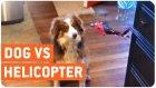 Köpeğin Oyuncak Helikopter ile İmtihanı