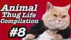 Hayvanlar Thug Life Yeni Derkeme