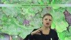 Damarsız Tohumsuz ve Damarlı Tohumsuz Bitkiler - YGS LYS | Lisego
