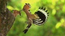 Ağır Çekimde Kuşun Yavrusunu Besleme Anı