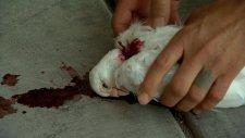 Başı Kopan Güvercini Hayata Döndüren İllüzyonist