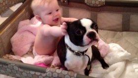 Bebeğin Yatağından Çıkmayan Köpek