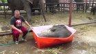 Bebek Filin Banyo Keyfi