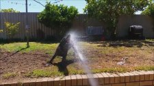 Köpeklerin Tazyikli Su İle İmtihanı