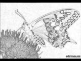 Monaroza
