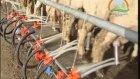 Gap Bölgesi Hayvancılık İşletmelerinin Sorunları