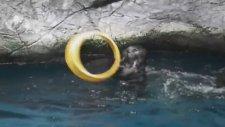 Su Samurlarının Muhteşem Gösterisinde Beklenmedik Kaza