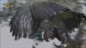 Harpy Kartalı & Tembel Hayvan