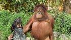 Hayvanların dostlukları görülmeye değer