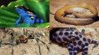 Dünyanın En Zehirli 10 Hayvan Türü