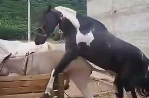 Xxx Hayvanlar 8