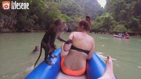 Güzelden Anlayan Maymun - Thug Life