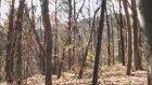 Abd'de Bir Ormanda Kameraya Yakalanan Hayalet