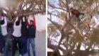 Ağacı Parçalamaya Çalışırken Havaya Uçtu