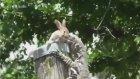 Kertenkele, Tavşanı Böyle Yedi