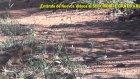 Firavun Faresi Ve Cobra Yılanının Mücadelesi