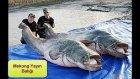 Dünyanın En Büyük 15 Hayvanı