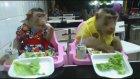 Sevimli Maymunların Yemek Sefası