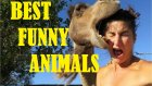 Funny animals Compilation || Best Funny Videos Animals 2015