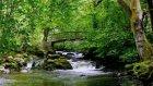 Nehir ve Kuş Sesi (8 Saat Doğa Sesleri)