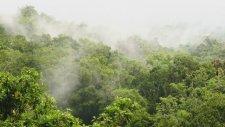 Yağmur Ormanları Sesi (11 Saat)