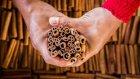 Dünyanın En Sevilen Baharatlarından Tarçın Nasıl Yapılır?
