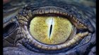Hayvanlar Alemi Hakkında 20 İlginç Bilgi