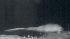 Küre Dağları'nda İlk Kez Su Samuru Göründü