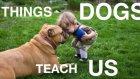 Can Dostlarımız Olan Köpeklerin Bize Öğrettikleri