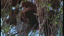 Amazon Ormanlarında Vahşi Hayvanlar Belgeseli