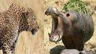 Leopard Saldırısı