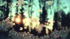 Rogue - Goodbye (Winter Chords)