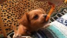 Komik Sevimli Köpekler Derleme