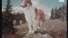 Lassie (Lessi) Tv Intro (1967)