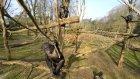 GoPro: Chimp Smashes Drone