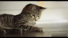 Dünyanın En Tehditkar Canlısı Olarak Kedi