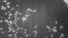 Yedi Samuray - Fragman - 1954 (Shichinin No Samurai / Seven Samurai)